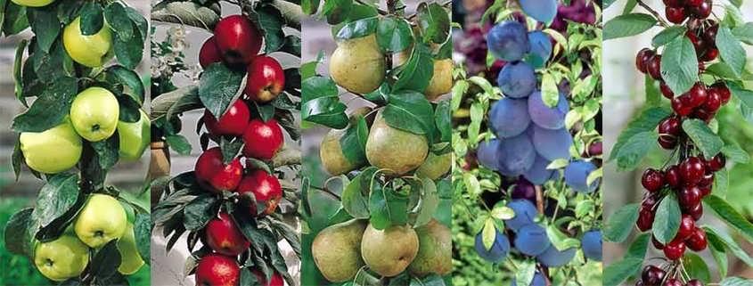 تمام درختان می توانند میوه بدهند!
