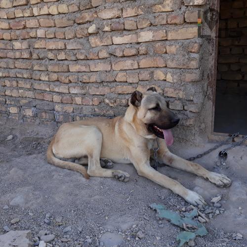 سگمون خدا بیامرز زمون سلامتیش یه چیزی تو این مایه ها بود!