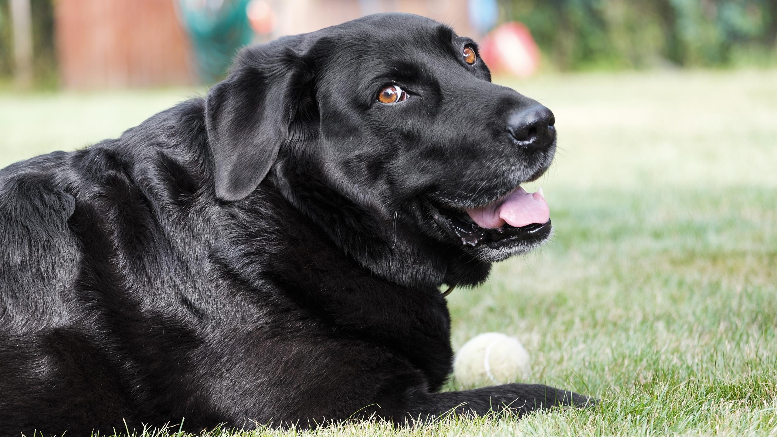 روبرو شدن با سگِ سیاه افسردگی با روش جالبِ رجب لوله کش!