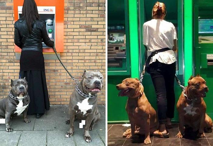 سگ های واقع در عکس سمت چپ کمی توسط نویسنده این مطلب سانسور شده اند!