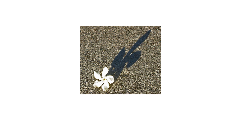 سایه با لبهای نور سخن می گوید