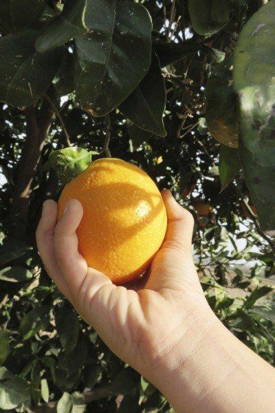 معرفت با طعم خوش پرتقال!