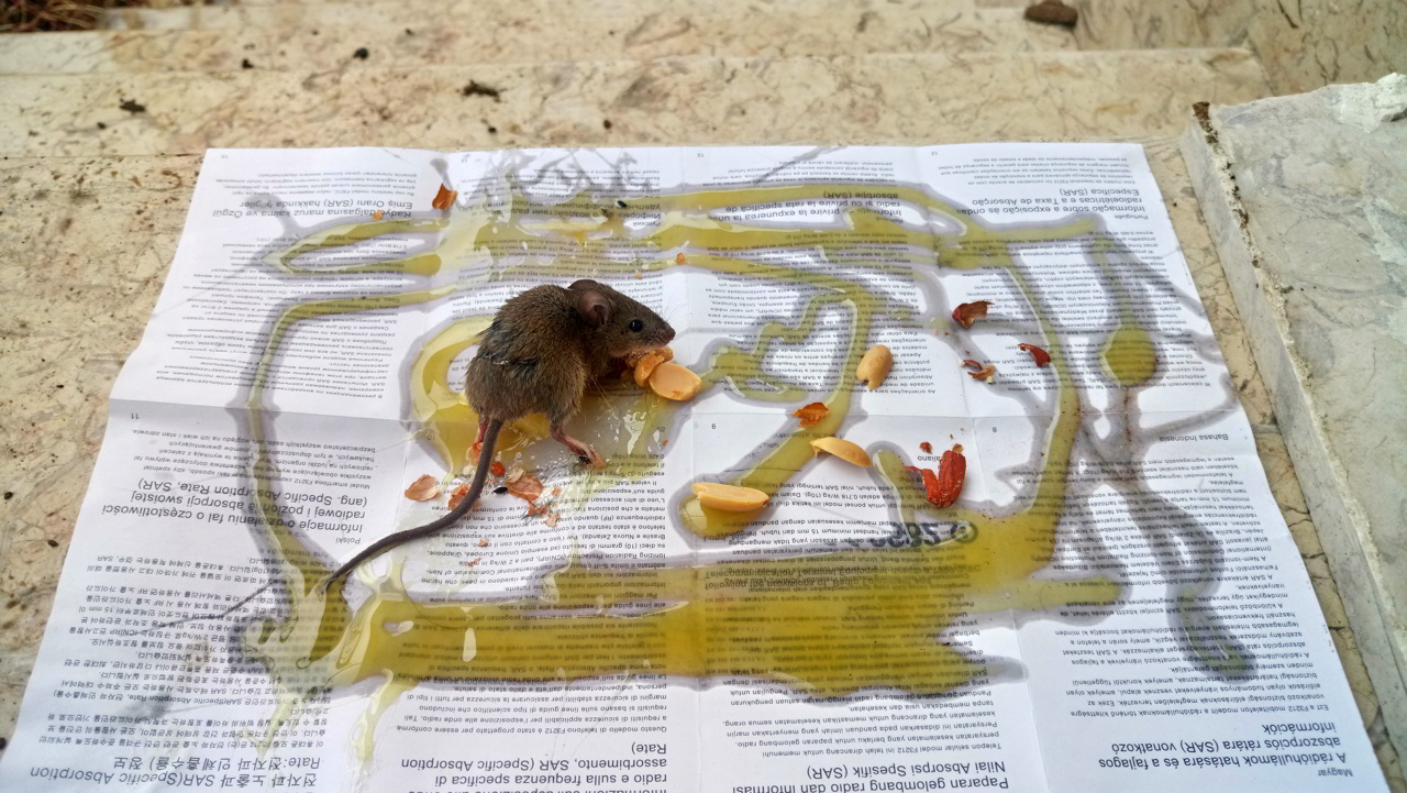وقتی موش به خانه می آید و تو را به سوالات فلسفی می کشاند.
