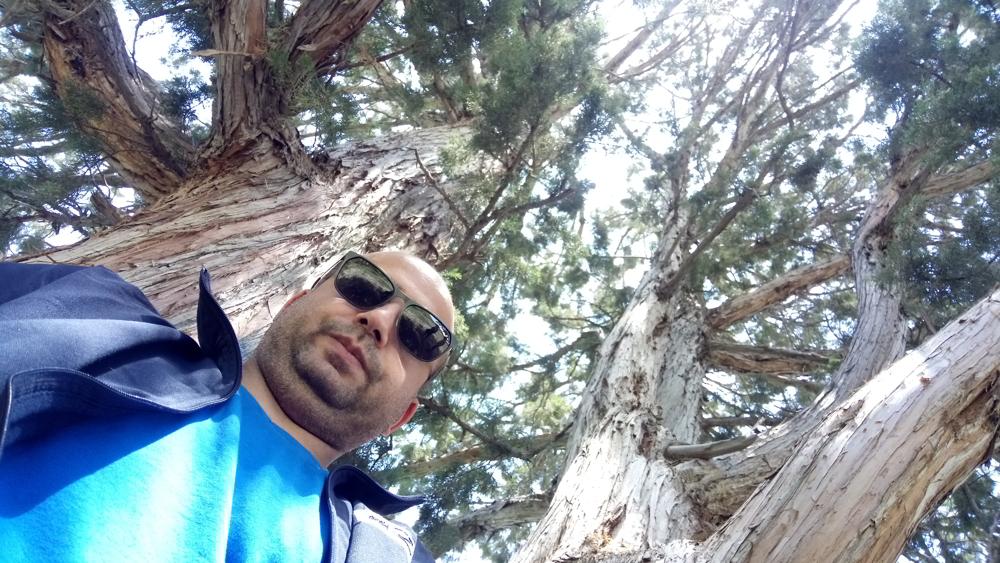 انسان از فرط روزمرگی به درخت پناه می برد؛ سایه اما کافی نیست باید بالا رفت.