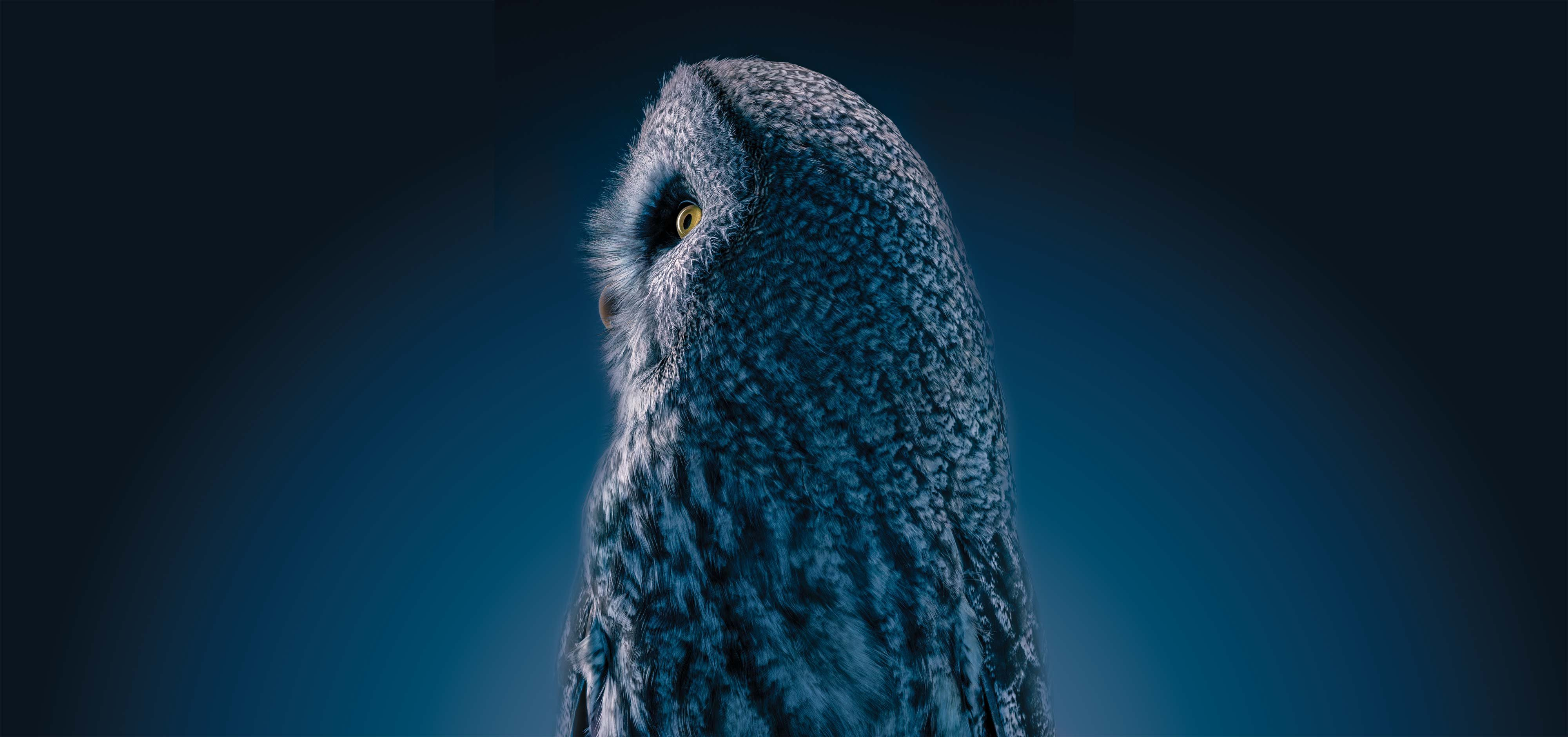 Tim Flach/Getty Images