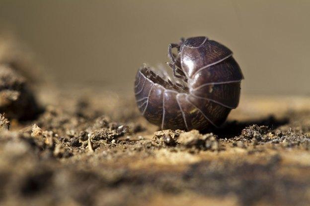 چیستید حشرات سیاه رنگ کوچک خانه؟