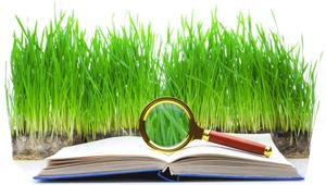 محتوای سبز چیست و چطور در فضای وب محتوای همیشه سبز تولید کنم؟