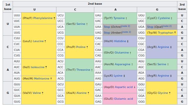 جدول کدونهای RNA برگرفته از ویکی پدیا