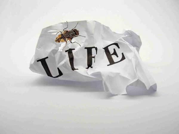 زندگی مگسی