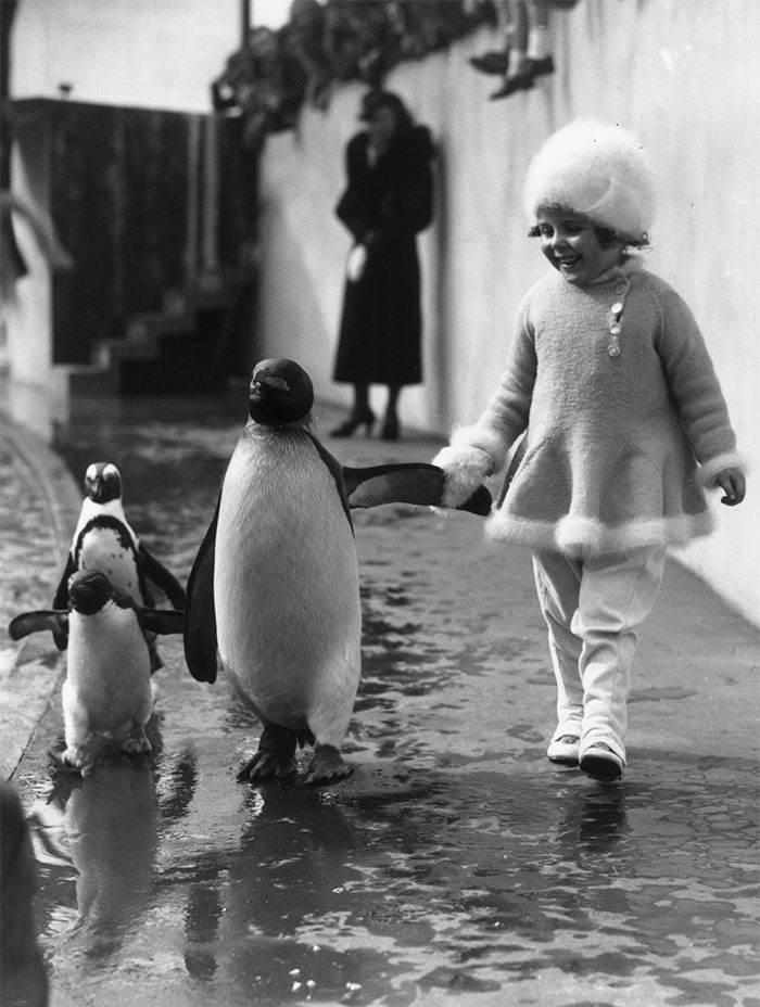 مرغ همسایه پنگوئنه؟!.. :)