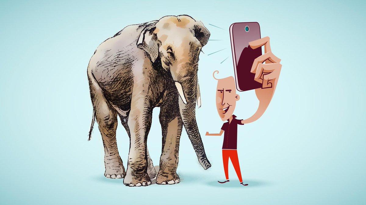 یک فیل ظاهر کن و از آن عکس بگیر