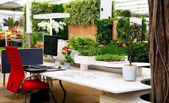 استفاده از گیاه در محیط کار