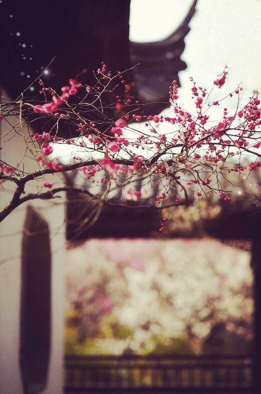 بهار بهار به مهمون قدیمی
