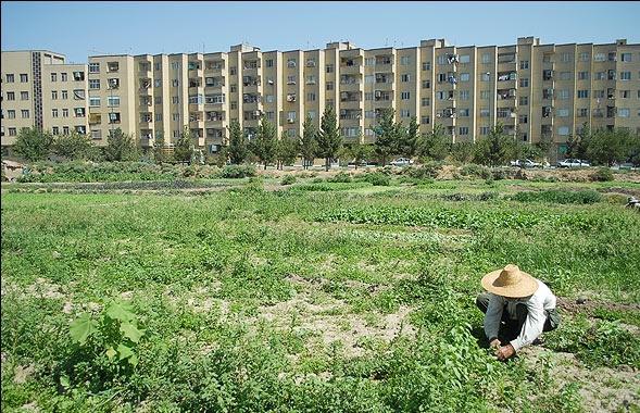 تقابل شهرسازی و کشاورزی