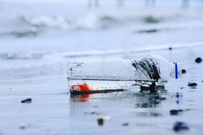 تراژدی ماهی قرمز تنگ بلور و نهنگ دریای عمان
