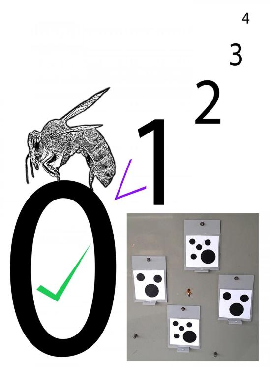 اولین حشراتی که مفهوم صفر رو درک میکنن پیدا شدن: زنبورها