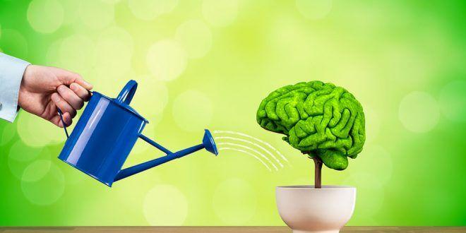 زمینه های خلاقیت ذهن