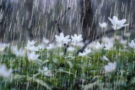 اخرین بارش سال 97:)