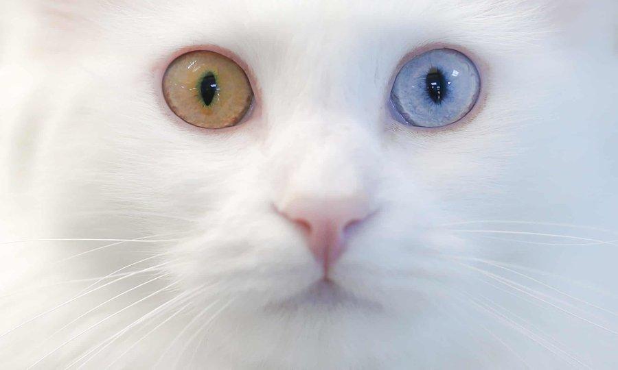 مثل گربه فکر کن، مثل گربه رفتار کن