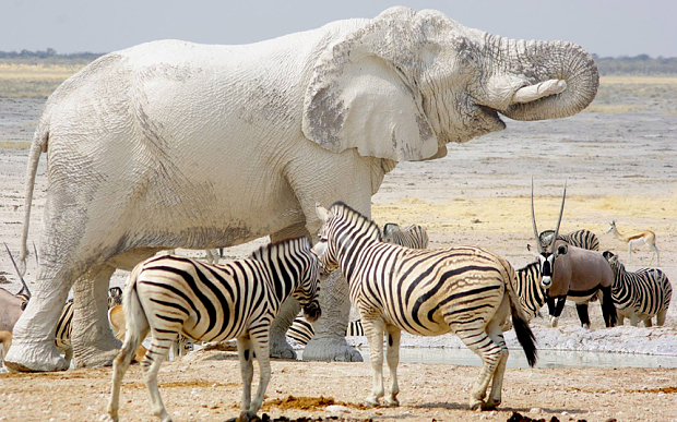 فیل های سفید واقعی هستند و سراسر زندگی ما رو پر کردند!!