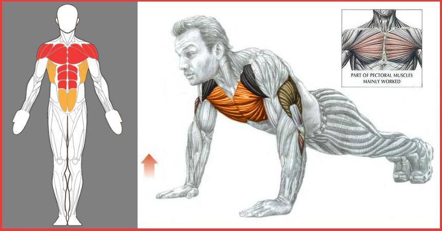 عضلات اصلی که در این تمرین تاثیر میپذیرند.