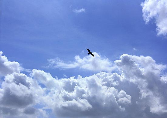 پرواز بادبادک