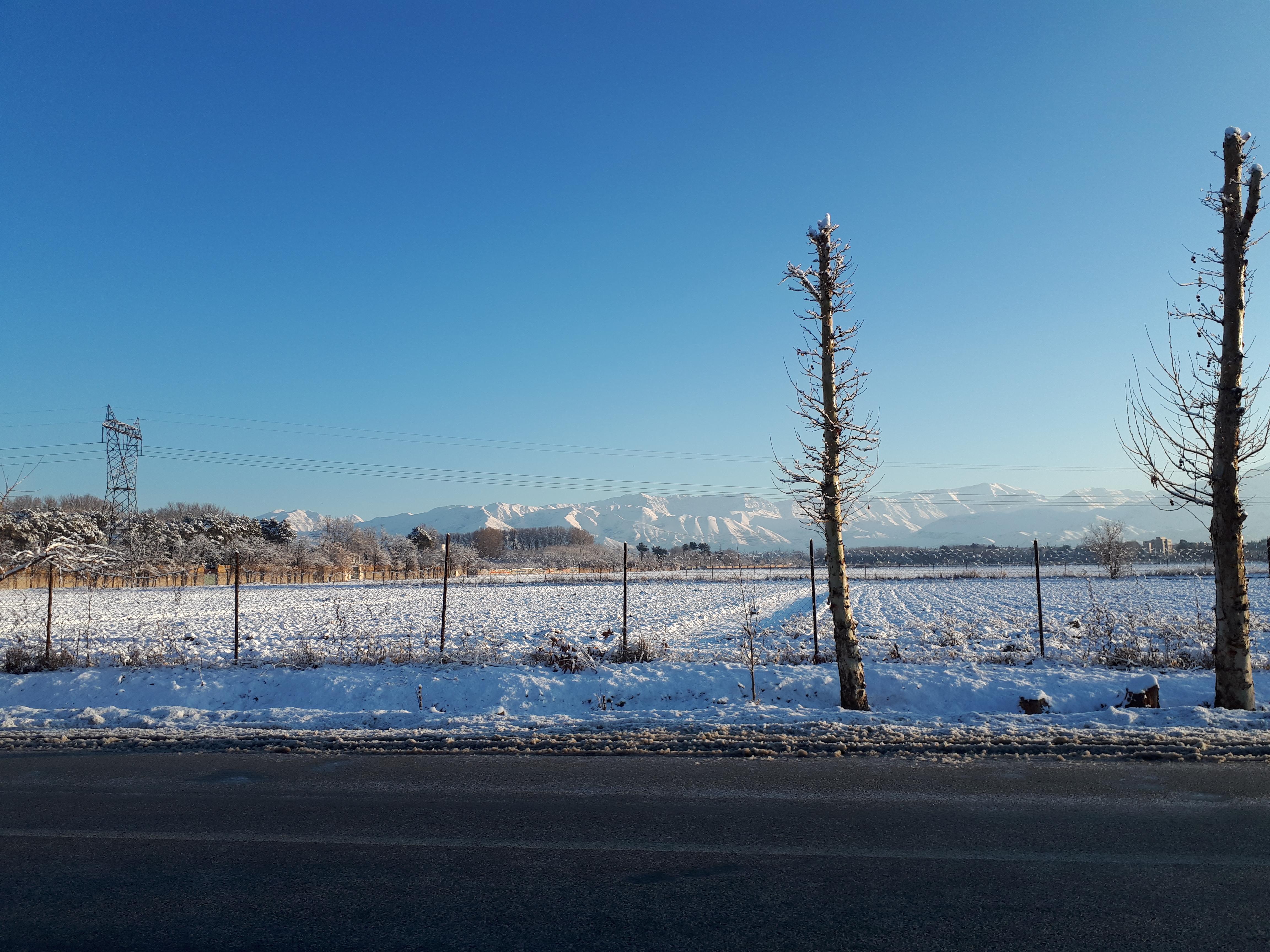 دو چنار زیر برف؛ عکس تزئ از خودم. زمستان 1397