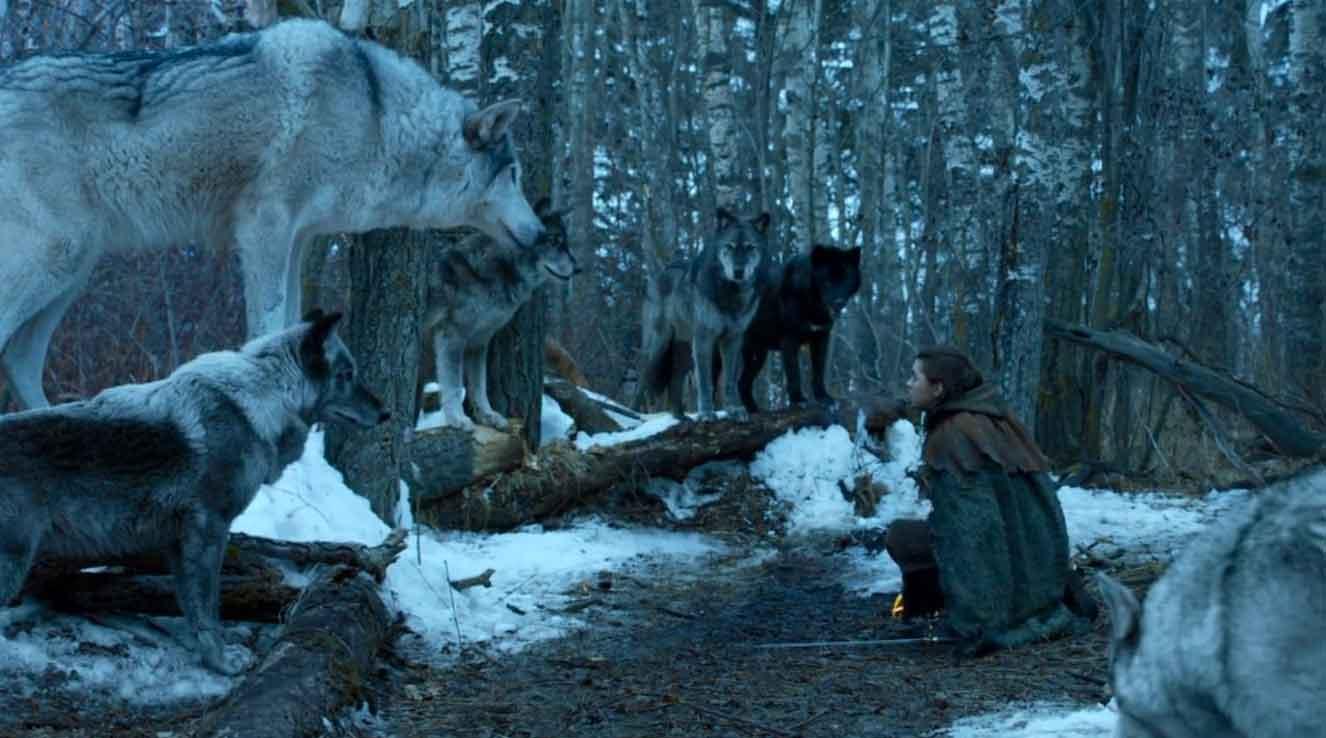 آریا در فصل ششم سریال Game of Thronesآریا کشته خواهد شد ولی روحش در جسم گرگی حلول خواهد گرد