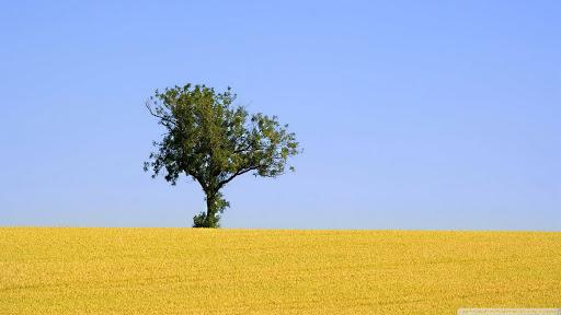 تنهایی، خوب یا بد؟