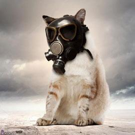 تاثیر آلودگی هوا بر حیوانات خانگی