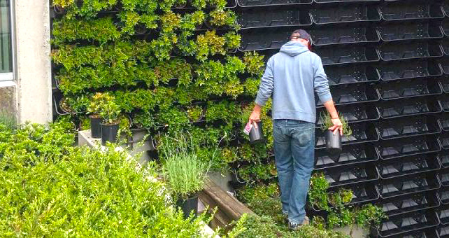 قیمت دیوار سبز (گرین وال) | Green Wall