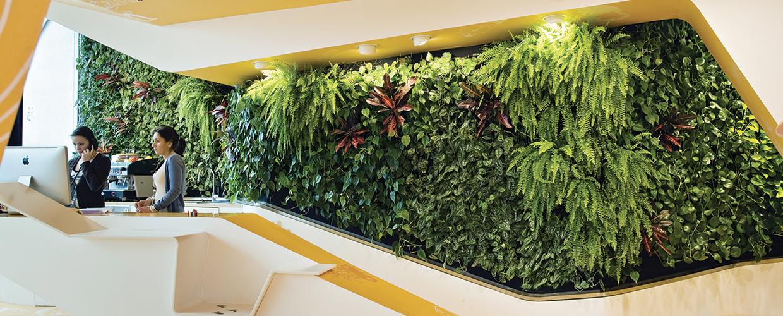 مزایای دیوار سبز
