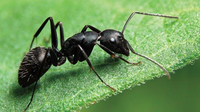 مراقب مورچه دیگران باشیم