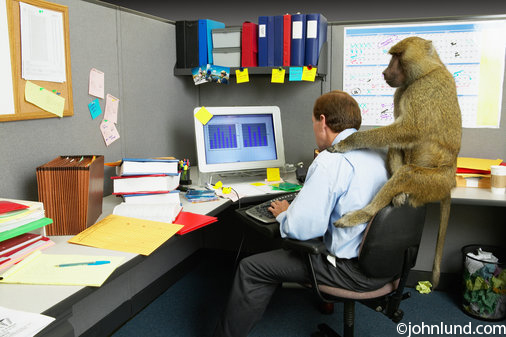 میمون رو دوش کیه؟