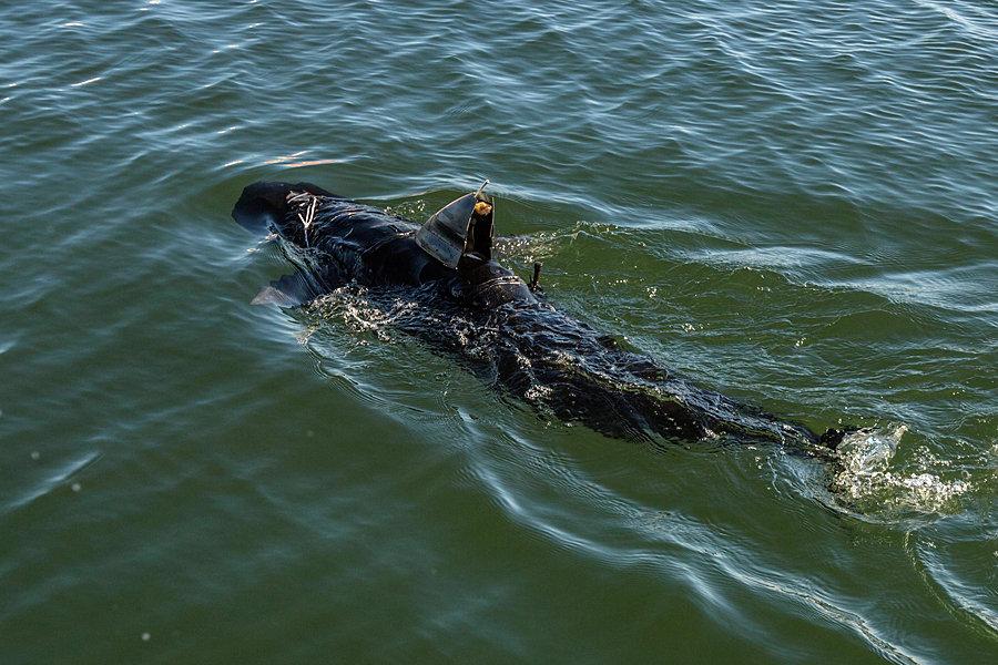 Ghostswimmer