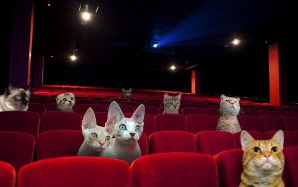 سینما، صد نمای برتر
