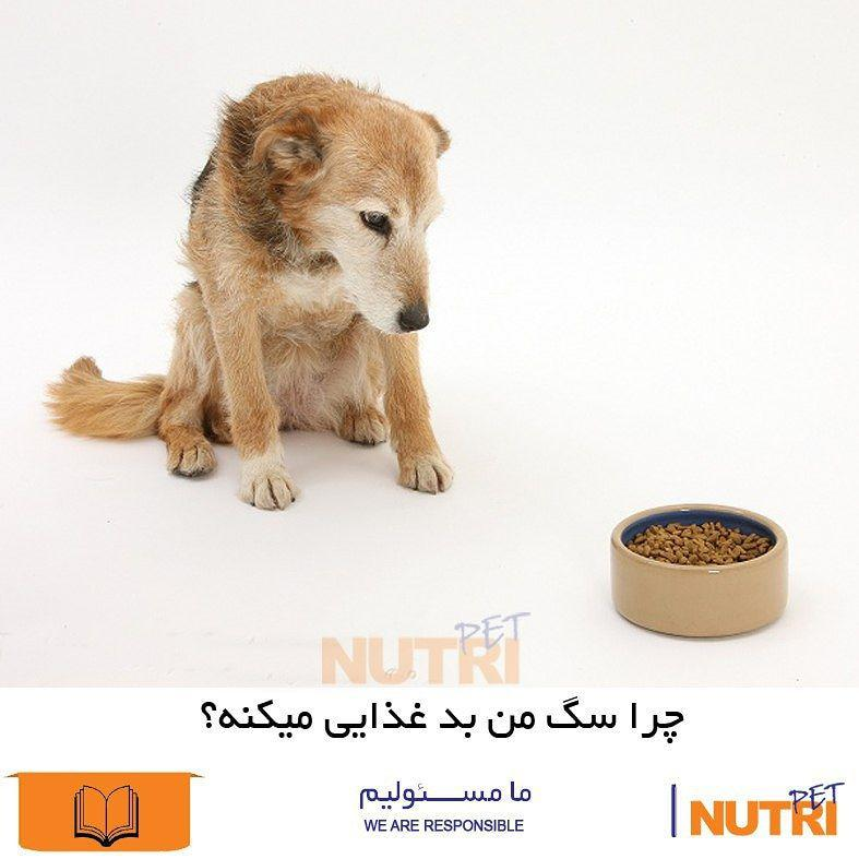 چرا سگ من بدغذایی میکنه ؟