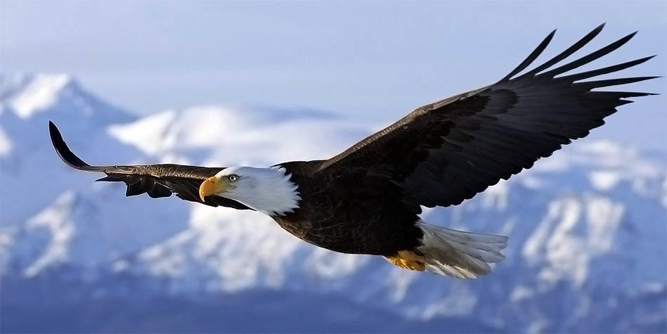 همچون عقاب جسور و بلندپرواز باشید