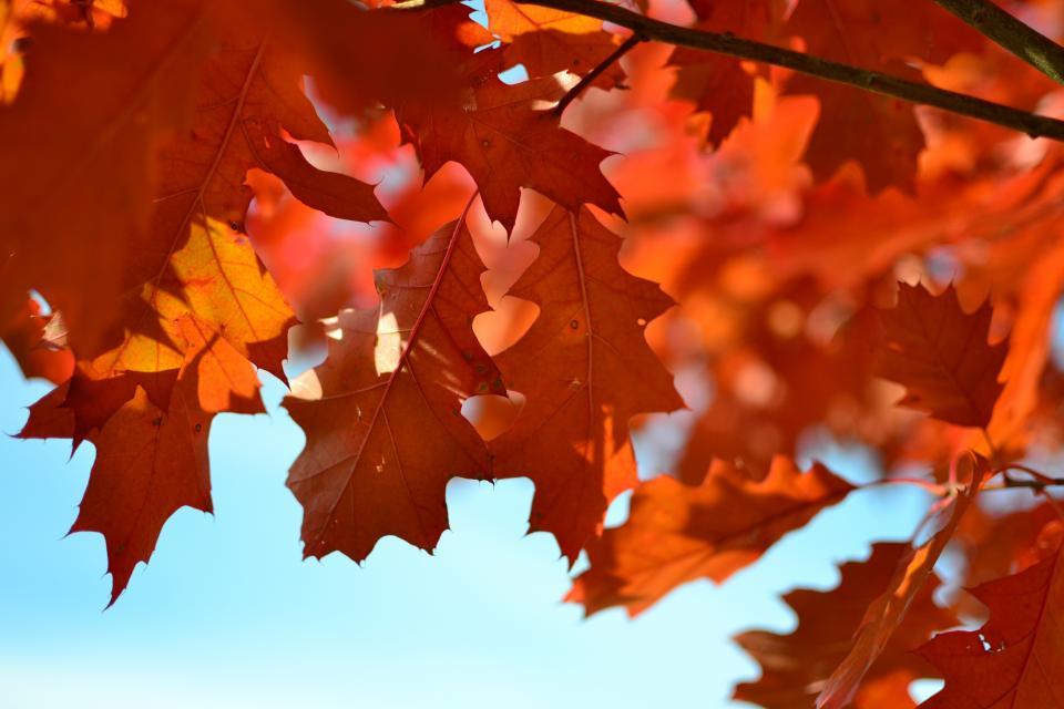 تصور پاییز در نیمه شب تابستان