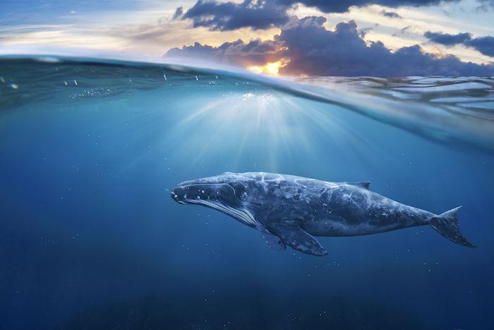 شیوه نهنگ