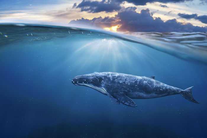 به شیوه نهنگ مدیریت کن!