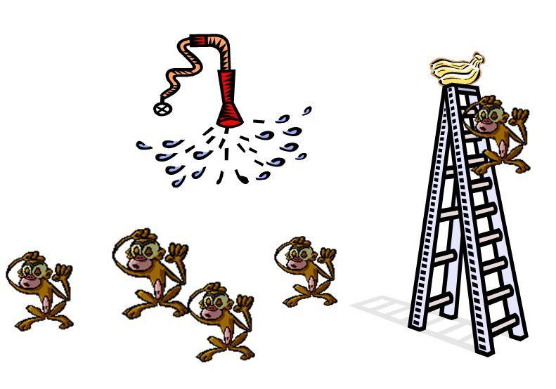 داستان میمونها و موز ممنوعه