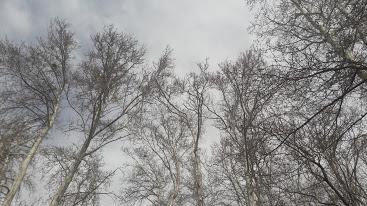 در ستایش باغی که ویژه است و درختانی که خبر از آسمان دارند