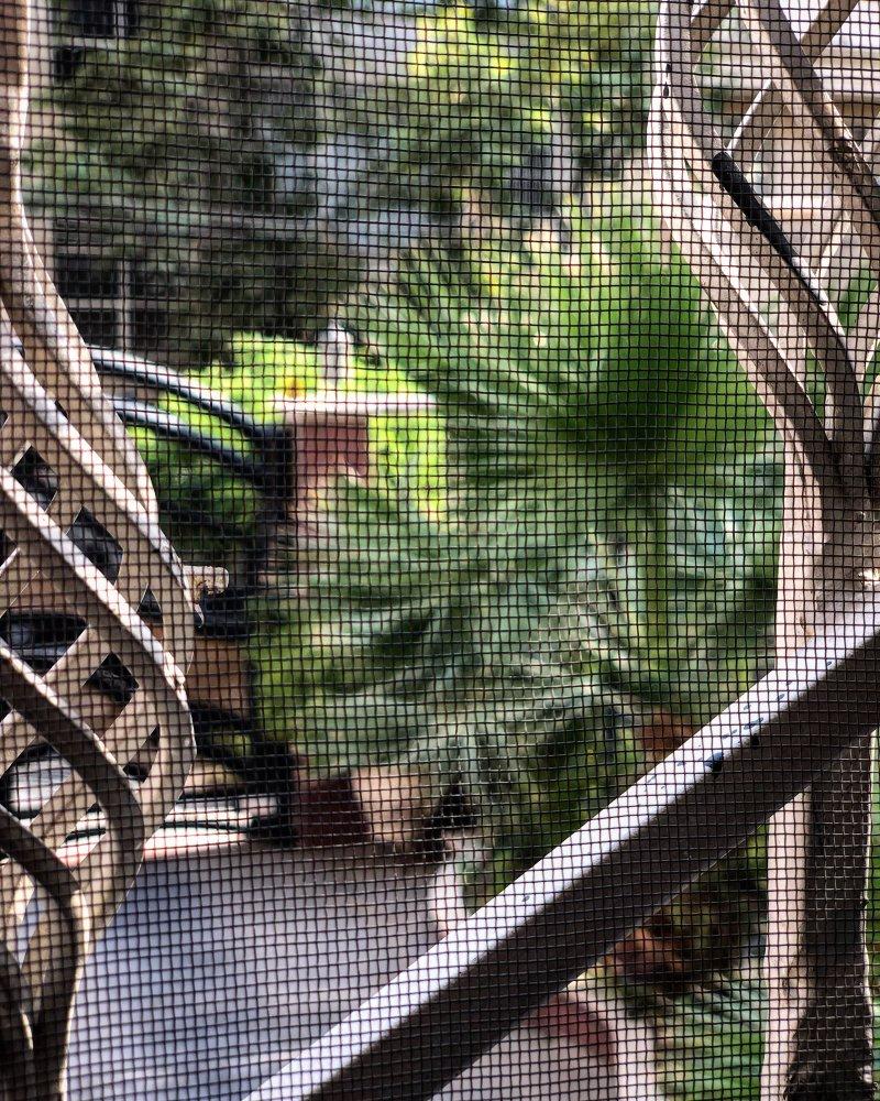 فلسفهبافی بر روی سکوی پشتِ پنجره