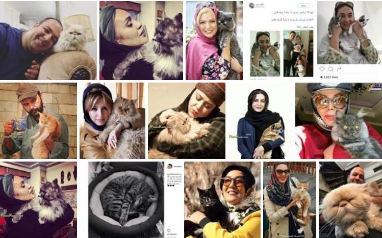 گربه بازیگر ایرانی