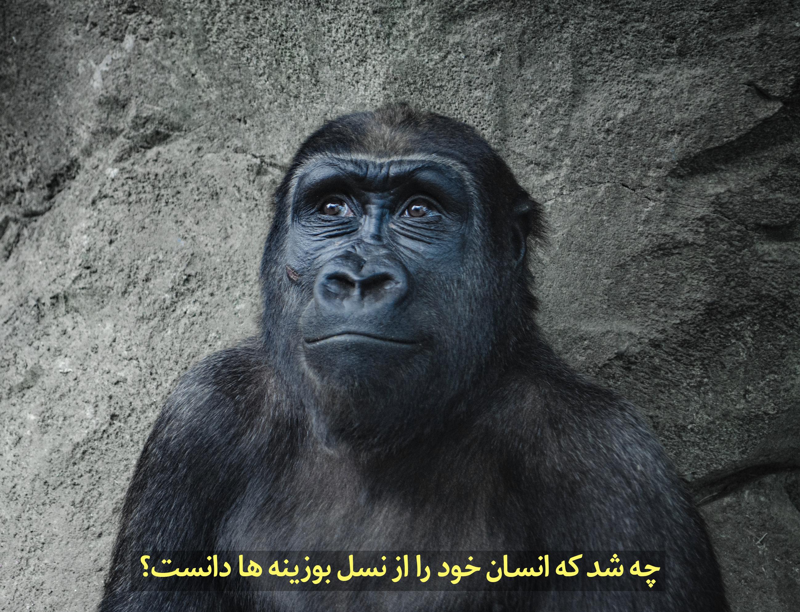 چه شد که انسان خود را از نسل میمون دانست؟