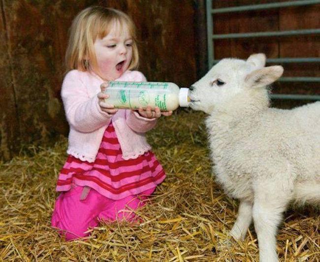 زندگی با حیوانات یک تجربه به یادماندنی