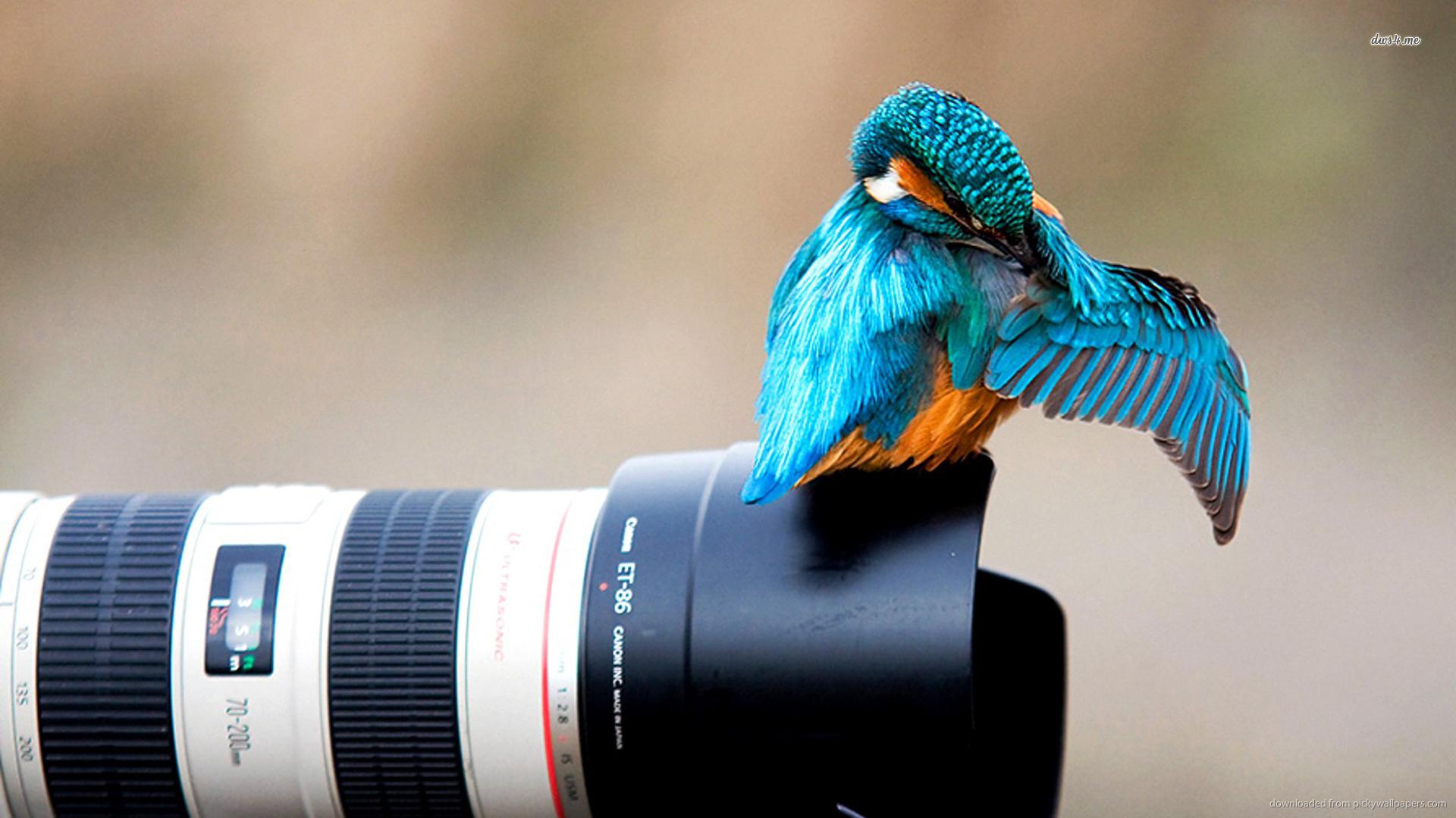 هنر عکاسی