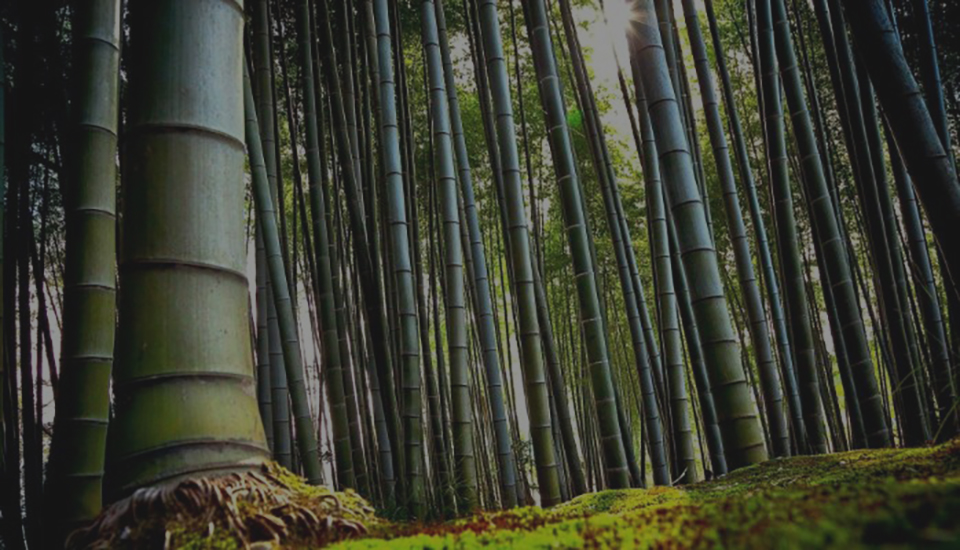 زندگی و موفقیت از زبان گیاه بامبو
