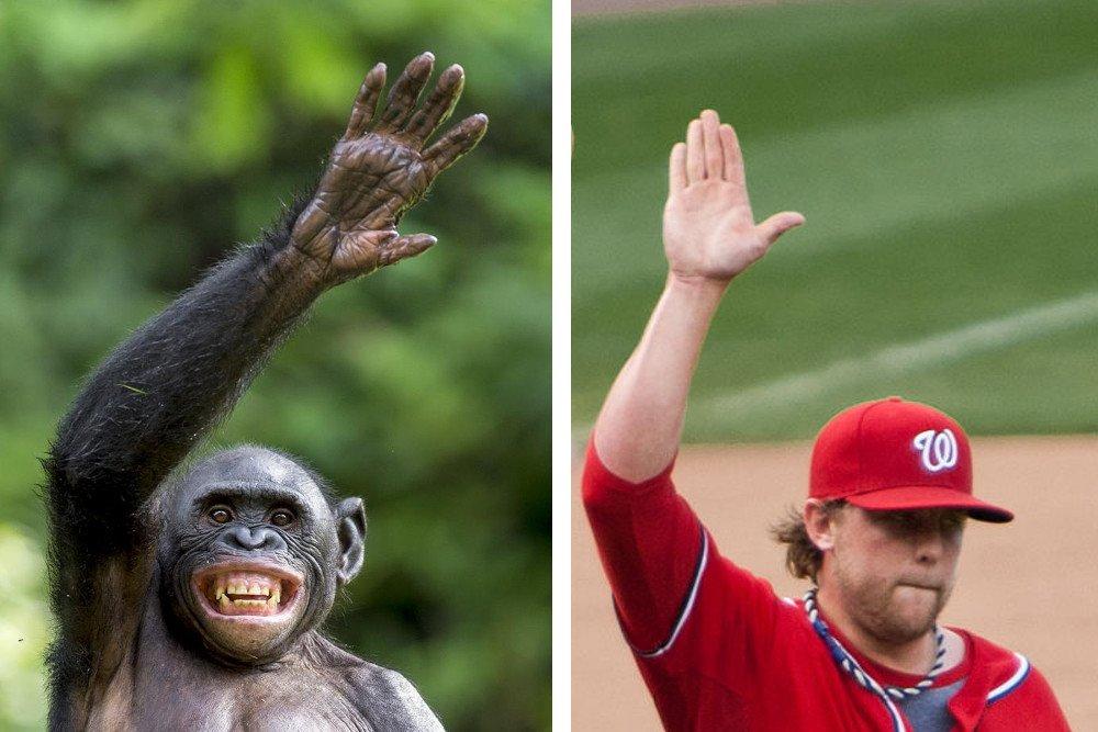 پس چرا همه میمون ها «تکامل» نیافتند و انسان نشدند!؟